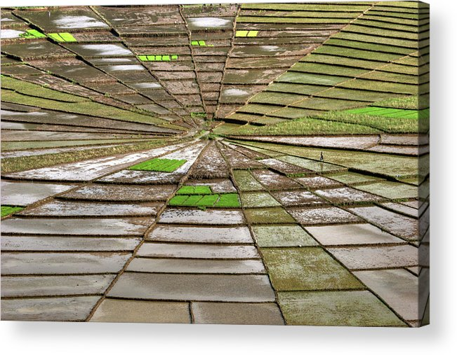 Working Acrylic Print featuring the photograph Working The Spiderwebs by Photo ©tan Yilmaz