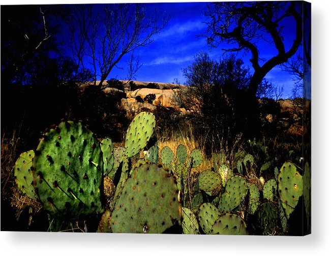 Landscapes Acrylic Print featuring the photograph Prickly Pears Enchanted Rock Texas by Tom Fant
