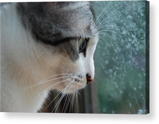 Cat Acrylic Print featuring the photograph Cat by FL collection