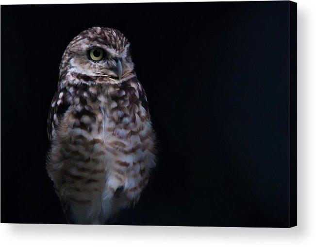 2012 Acrylic Print featuring the photograph Owl by Daniel Kocian