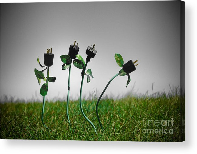 Alternative Energy Acrylic Print featuring the photograph Growing Green Energy by Amy Cicconi