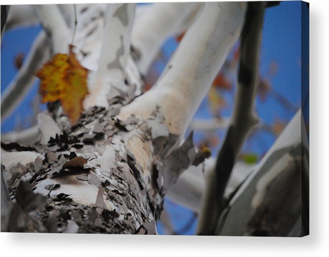 Nature Acrylic Print featuring the photograph Looking Up by Frank Pharo