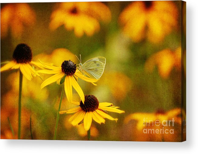 Butterfly Acrylic Print featuring the photograph Abundance by Lois Bryan