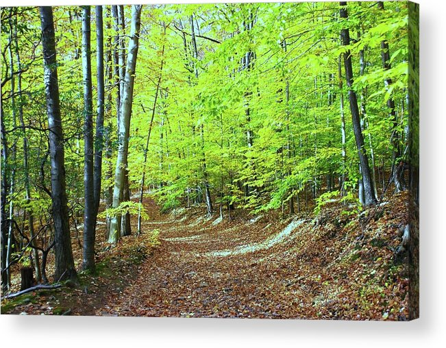 Eagle Rock Reservation Acrylic Print featuring the photograph Autumn Gold 3 by Allen Beatty