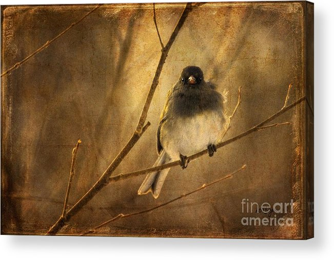 Bird Acrylic Print featuring the photograph Backlit Birdie Being Buffeted by Lois Bryan