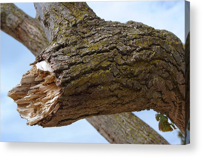 Nature Acrylic Print featuring the photograph Broken Branch Color by Tim Brandt