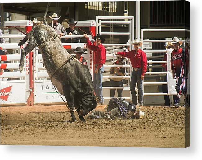 2014 Acrylic Print featuring the photograph Bull One And The Rider Nothing by Bill Cubitt
