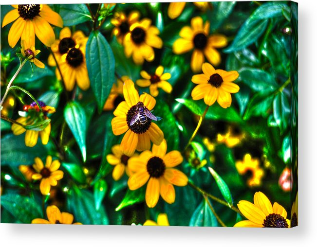 Bee Acrylic Print featuring the photograph Busy Bee by Randy Aveille