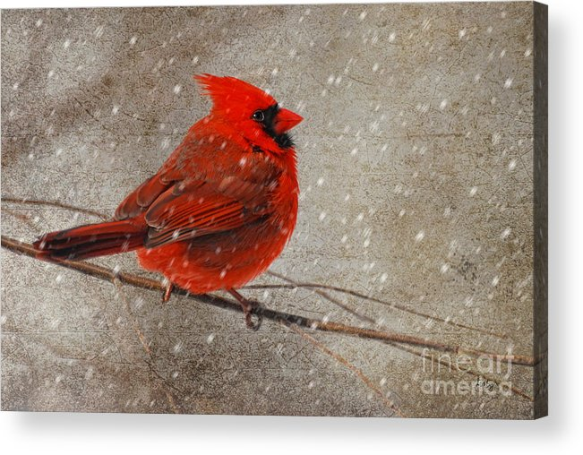 White Christmas Acrylic Print featuring the photograph Cardinal In Snow by Lois Bryan