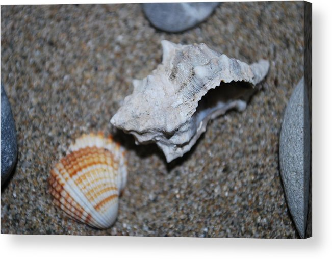 Conch Acrylic Print featuring the photograph Conch 2 by George Katechis