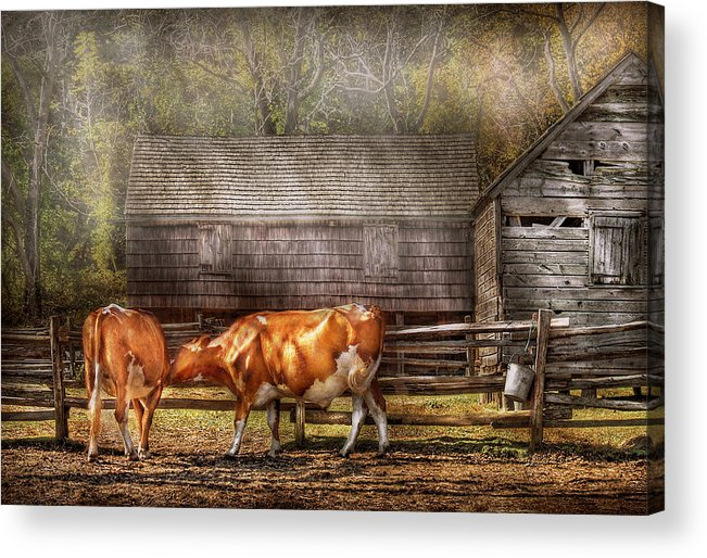 Savad Acrylic Print featuring the photograph Farm - Cow - A Couple Of Cows by Mike Savad
