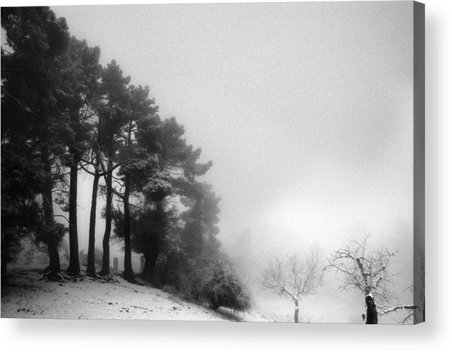 Black And White Acrylic Print featuring the photograph Five Trees by Guido Montanes Castillo