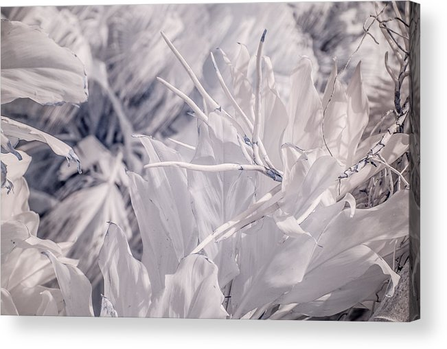 Infrared Photography Acrylic Print featuring the photograph Florida Whites by Ellie Perla