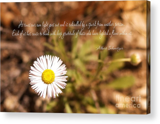 Friendship Acrylic Print featuring the photograph Friendship by Barbara Shallue