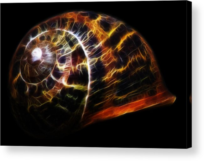 Shell Acrylic Print featuring the photograph Glowing Shell by Shane Bechler