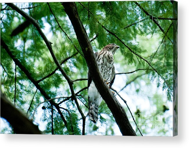 Wildlife Acrylic Print featuring the photograph Guardian by Barbara Shallue