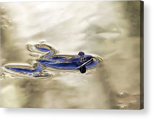 Frog Acrylic Print featuring the photograph Hey Bullfrog by Francis Sullivan