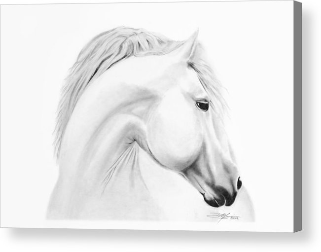 Horse Acrylic Print featuring the drawing Horse by Don Medina