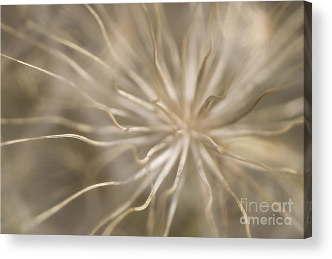Andalucia Acrylic Print featuring the photograph Inside by Anne Gilbert