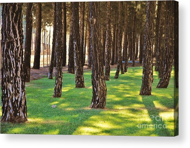 Forest Acrylic Print featuring the photograph Nature Walk by Herman Cloete