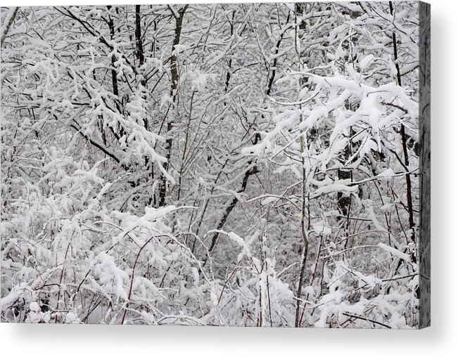Winter Acrylic Print featuring the photograph Nature's Blanket by Carla P White