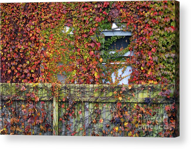 Historical Acrylic Print featuring the photograph Over The Back Fence by Paul W Faust - Impressions of Light