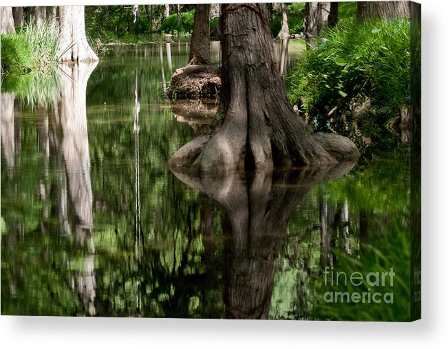 Landscape Acrylic Print featuring the photograph Roots by Barbara Shallue