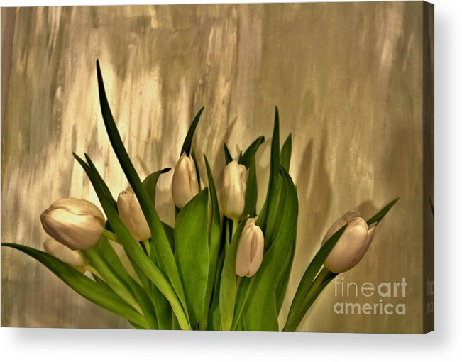 Photo Acrylic Print featuring the photograph Satin Soft Tulips by Marsha Heiken