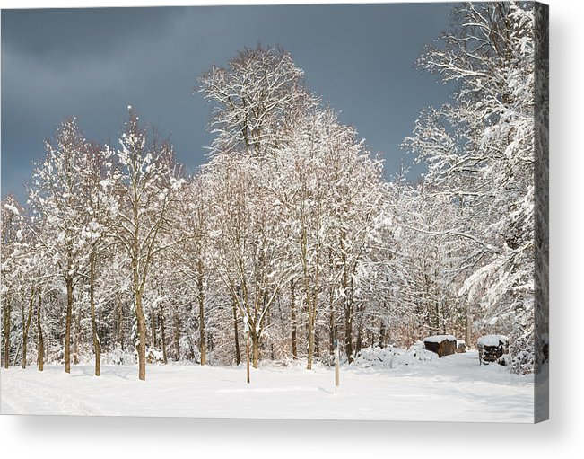 Winter Acrylic Print featuring the photograph Snow Covered Trees In The Forest In Winter by Matthias Hauser