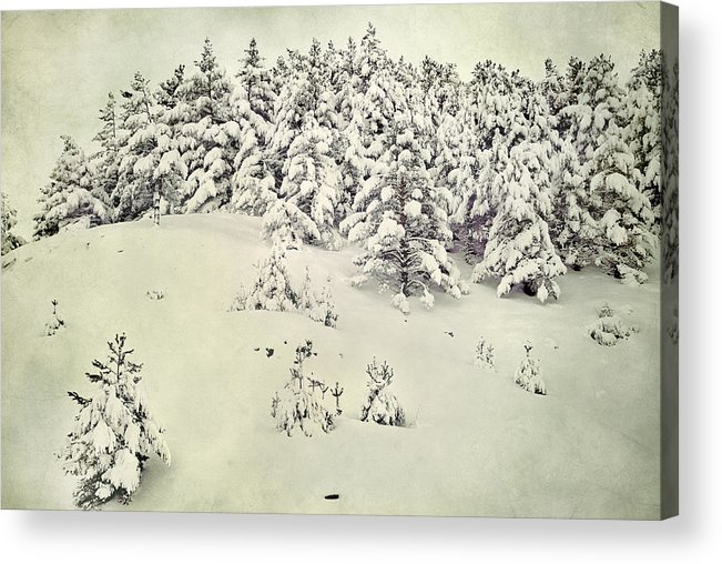 Landscapes Acrylic Print featuring the photograph Snowy Forest Vintage by Guido Montanes Castillo