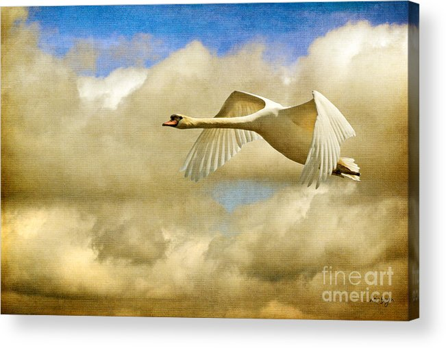 Nature Acrylic Print featuring the photograph Swan Song by Lois Bryan