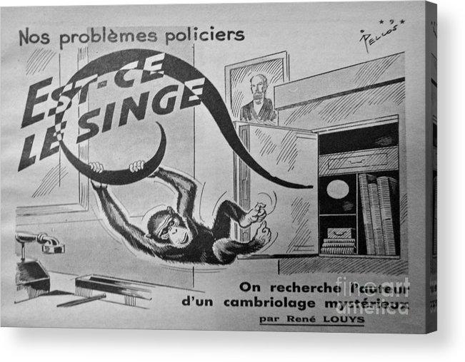 Monkey Acrylic Print featuring the photograph Swinging Monkey by Jost Houk