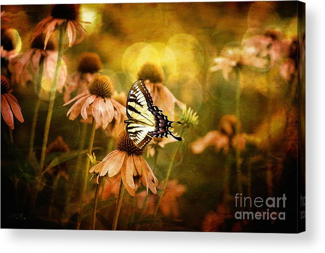 Floral Acrylic Print featuring the photograph The Very Young At Heart by Lois Bryan