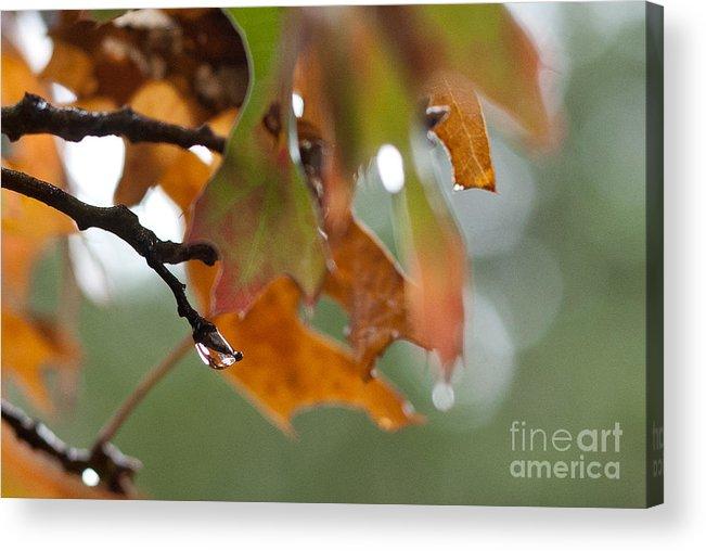 Raindrops Acrylic Print featuring the photograph Tiny Leaf by Barbara Shallue