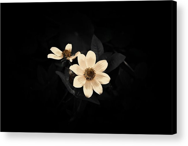 Black & White Flowers Acrylic Print featuring the photograph Two By Two by Holly Groves