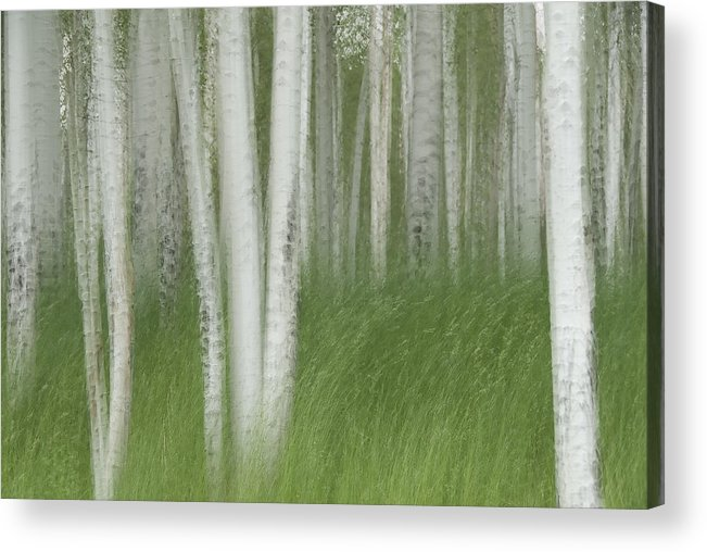 Colorado Acrylic Print featuring the photograph Wind In The Aspen by Nancy Myer