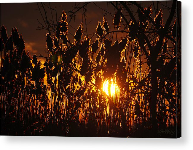 Acrylic Print featuring the photograph 05 Sunset by Michael Frank Jr