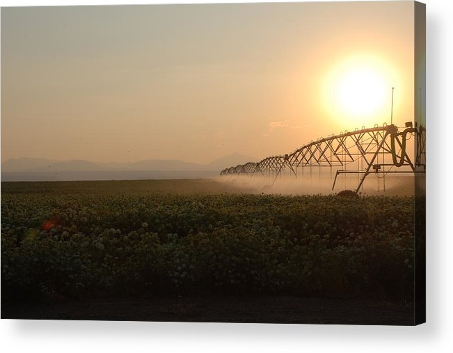 Sprinkler Acrylic Print featuring the photograph Farm Sunset by Linda Larson
