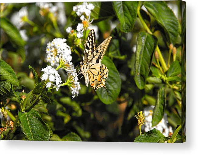 Wild Flowers Acrylic Print featuring the photograph Butterfly On Blooming Flowers by Manolis Tsantakis