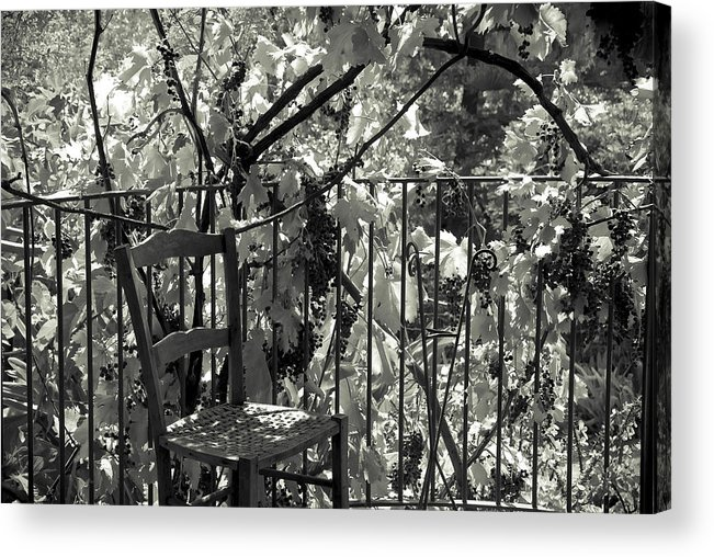 Grapevine Acrylic Print featuring the photograph A Place Like This by Michele Mule