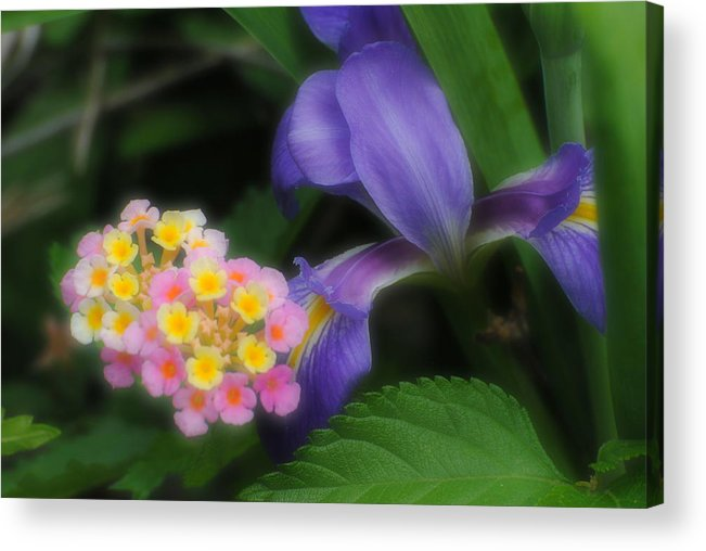 Flowers Acrylic Print featuring the photograph Beauty by John Blanchard