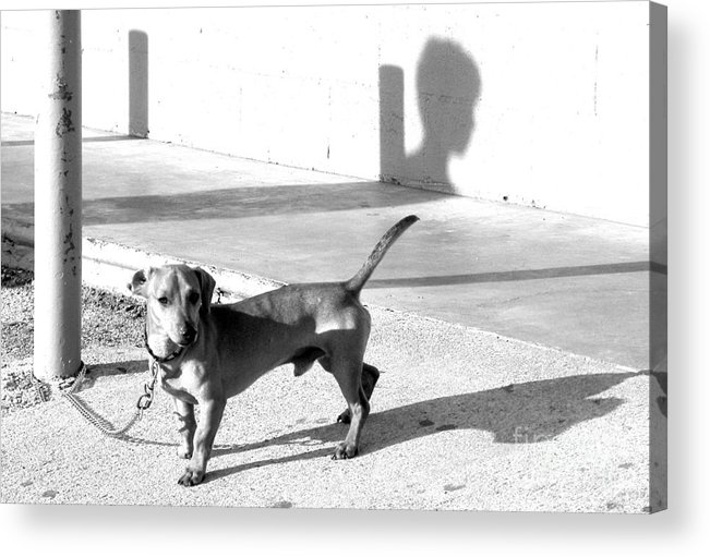 Dog Acrylic Print featuring the photograph Boy Meets Dog by Joe Jake Pratt