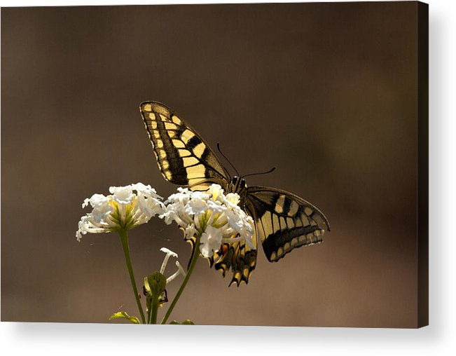 Wild Flowers Acrylic Print featuring the photograph Butterfly On Blossom Flowers by Manolis Tsantakis