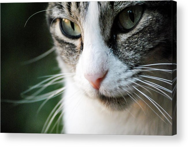 Horizontal Acrylic Print featuring the photograph Cat Portrait by Julia Williams