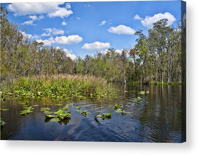Florida Landscapes Acrylic Print featuring the photograph Cedar Key Swamp by Betty Eich