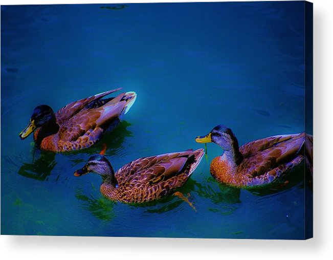Wildlife Acrylic Print featuring the photograph Chiling by Lorenzo Roberts