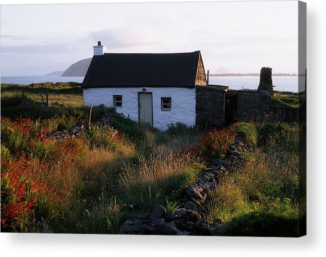Blooming Acrylic Print featuring the photograph Cottage, Near Dunquin, Dingle by The Irish Image Collection