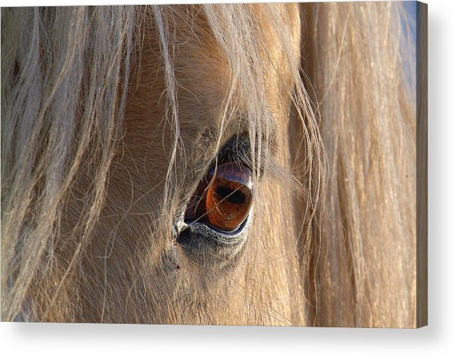 Acrylic Print featuring the photograph Eyes Of Beauty.. by Al Swasey