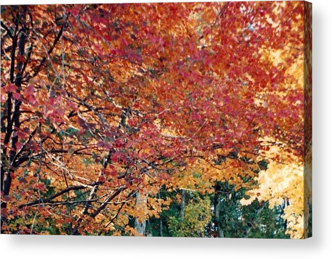 Photograph Acrylic Print featuring the photograph Fall Trees 18 by Debbie Wassmann