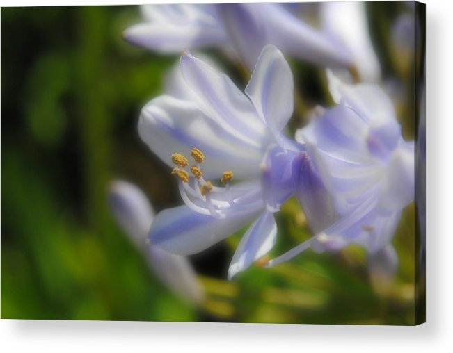 Flowers Acrylic Print featuring the photograph Flowers by John Blanchard